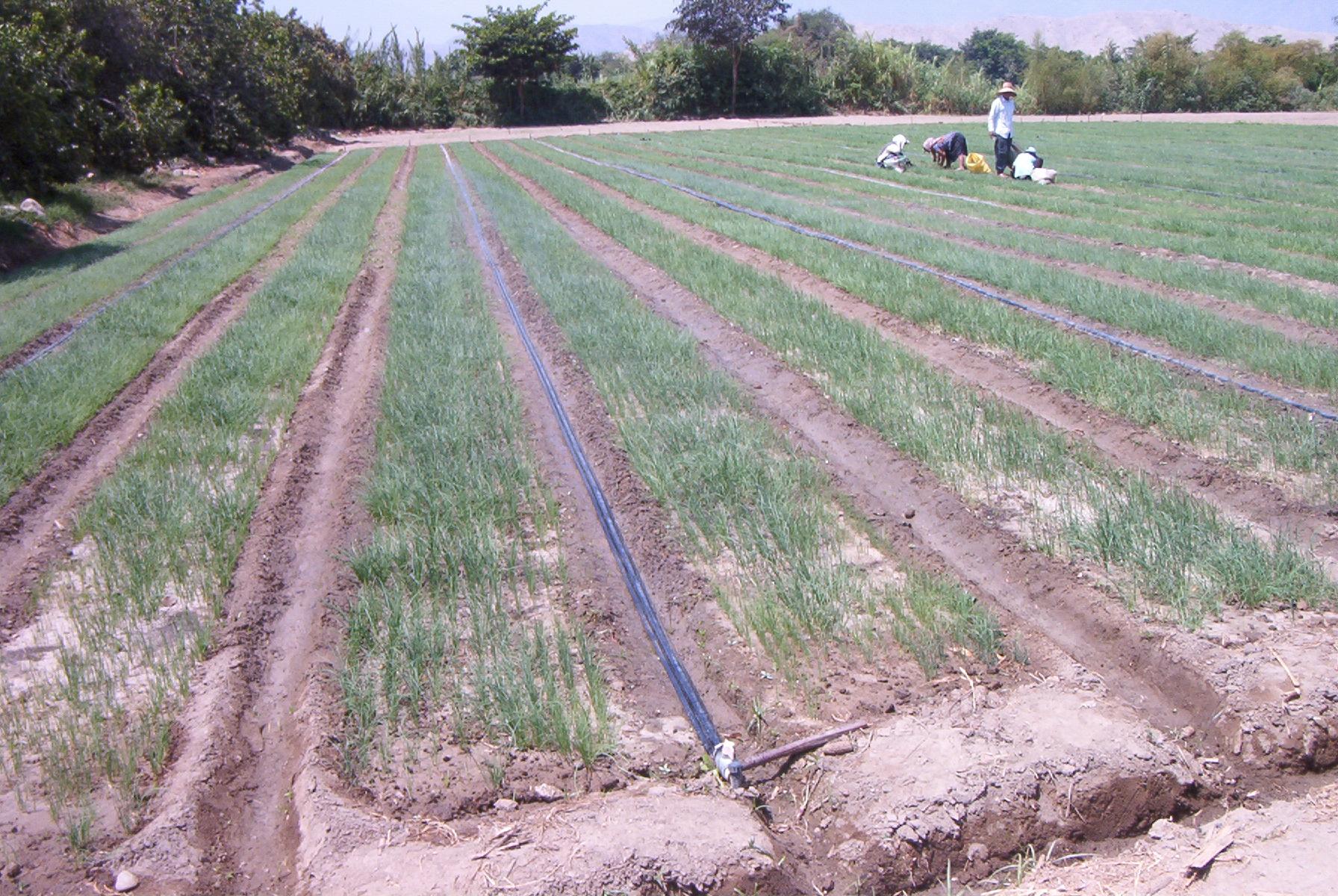 Propuesta de gesti n de los recursos h dricos en casma for Aspersores para riego de jardin