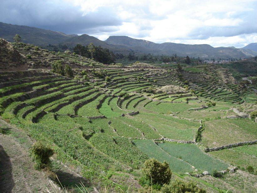 Andenes en Andamarca - Lucanas Ayacucho