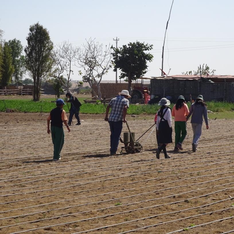 Maestro rural enseñando manejo agronómico, tecnificación del riego....