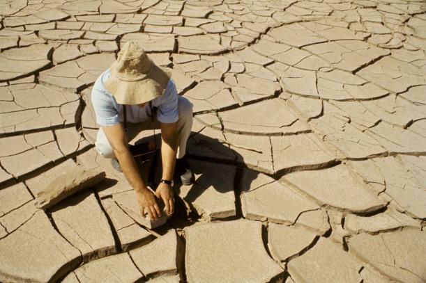 El impacto de El Niño en la producción agropecuaria y seguridad alimentaria de Centroamérica y el Caribe : AGRO Noticias