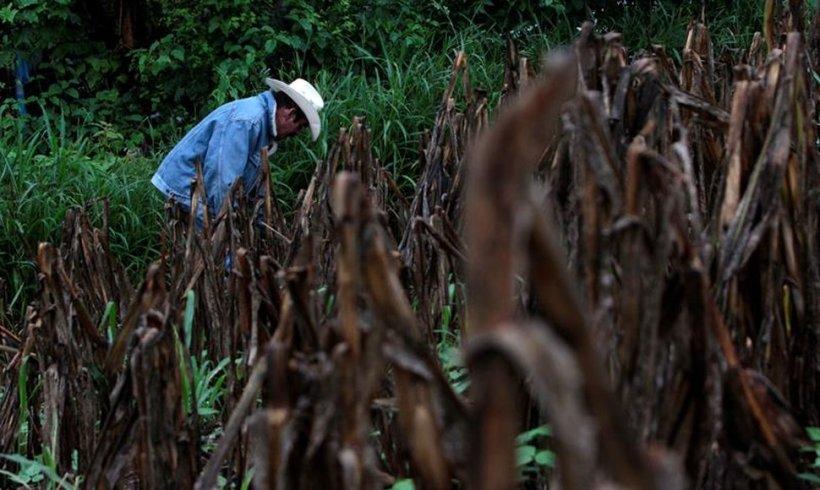 Sequia en Centroamerica 2