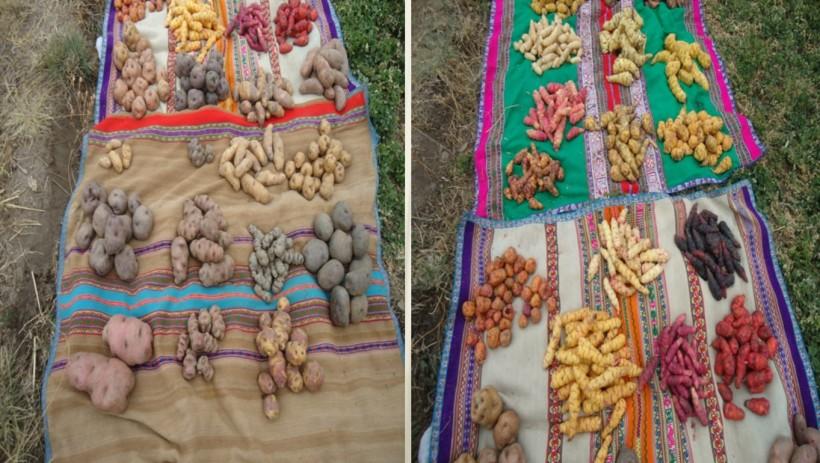 La pequeña y mediana agricultura es la base de la seguridad alimentaria
