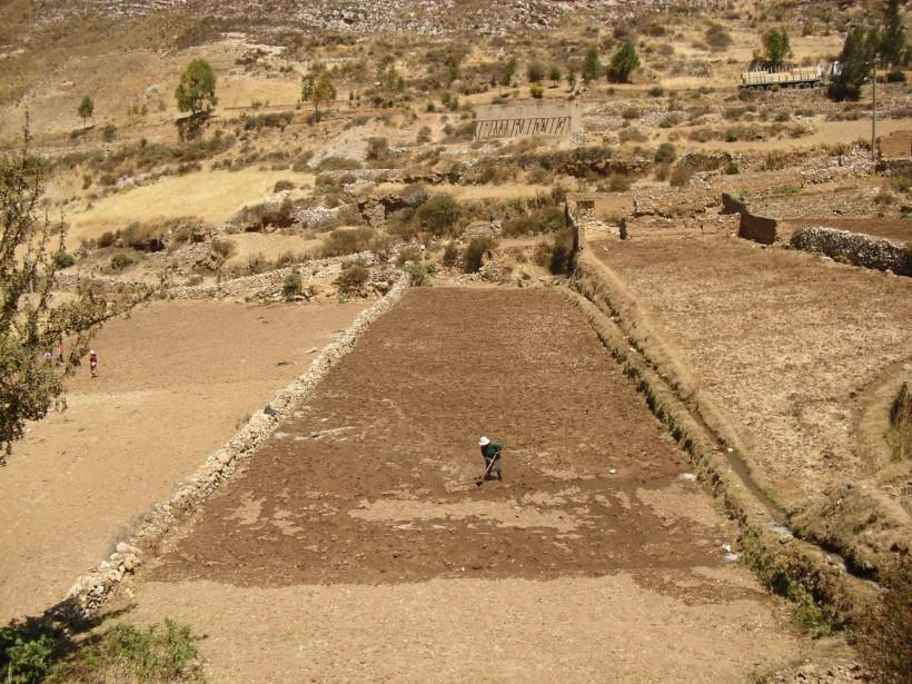 Regando un topo en la comunidad de Mullucro - Junín