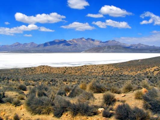 Bofedales y Laguna de Salinas