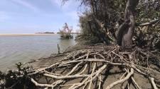 manglares-san-pedro-de-vice-02