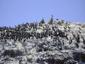reserva-nacional-de-paracas-5