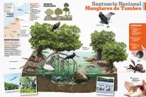 santuario-nacional-los-manglares-de-tumbes-04