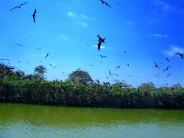 santuario-nacional-los-manglares-de-tumbes-07