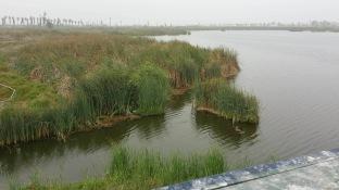 zona-reservada-los-pantanos-de-villa-6