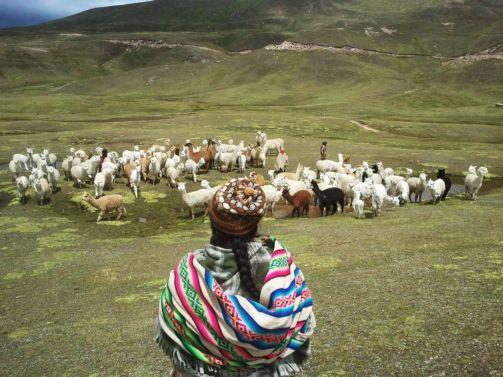 Sistemas de crianza de ganado (3.800-4500 m.)