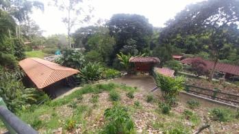 Luego hicimos el Sendero del Café, es un entretenido recorrido a través de la flora, las costumbres y las tradiciones de la región cafetera