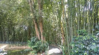 A la vez que nos deleitamos con el paisaje y el conocimiento del sendero, realizamos una suave caminata para ejercitar el cuerpo