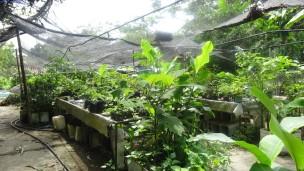 Vivero del Sendero Agroecológico también una mezcla de variedades y convivencia natural