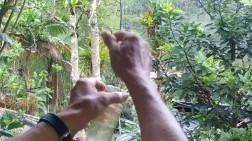 Además coloca agua en unos bebederos adecuados para que vengan unos de los animalitos más hermosos: el colibrí