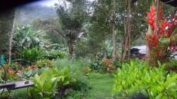 Admirar ese paraíso de flores, verdor y aves que cantan al amanecer simplemente es un concierto ofrece la naturaleza a la vida