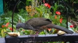 Admiramos como vienen aves de diferentes tamaños...