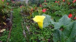 Cartuchos amarillos (una variedad difícil de ver en otros lugares)