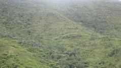 Un aspecto que diferencia de otros países a Colombia, es el verdor y la presencia de especies forestales a lo largo de su territorio, como país tropical, la precipitación es muy alta, por encima de los 1200 mm de lluvia, a diferencia de Perú, donde la precipitación es mucho menor, y la desertificación se ha agudizado en los últimos años y se tiene la necesidad de plantear proyectos de reforestación con las implicancias de orden social que se debe considerar en este tipo de proyectos