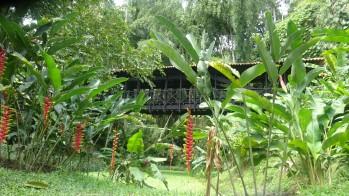 Una variada plantación de café nos acompañaba a lo largo del sendero, así como un hermoso bosque de guadua
