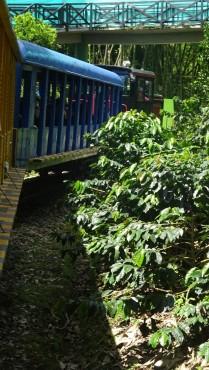 Por supuesto subir al Tren del café en un recorrido que atraviesa la segunda etapa del Parque Nacional del Café donde se recrea parte de la historia del país, en la cual el tren fue el principal medio de transporte de la época.