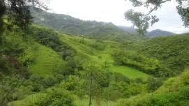 Hermosos paisajes, como toda Colombia, rodea a Palmira. Vamos por una ruta que ha sido de protección forestal y donde los deslizamientos eran comunes.