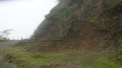 A lo largo del caminos es común ver como plantas de pino se ha caído a veces obstruyendo el camino.