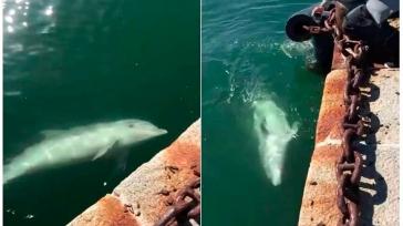 ...hasta delfines han aparecido