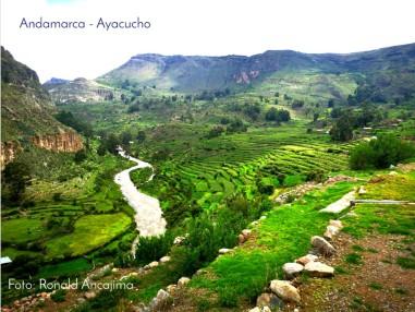 Andenes de Andamarca en el Valle Sondondo; 15,000 ha que esperan solo una acción decidida para verlos en producción de alto rendimiento (no solo con maíz y alfalfa como en la actualidad). Foto: Ronald Ancajima